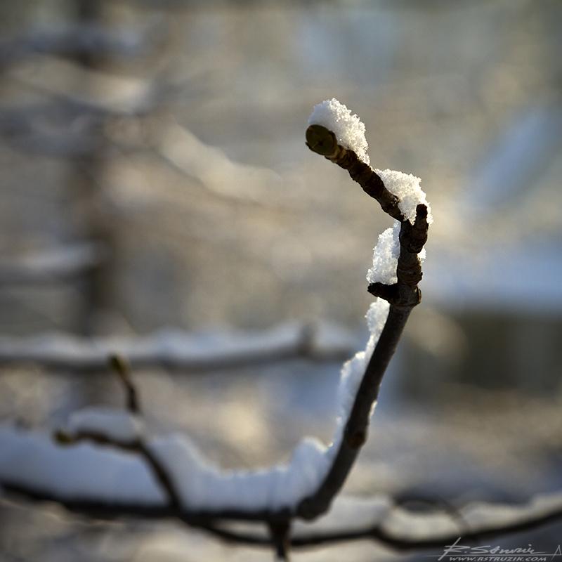 Zakopane. Pobudka pt. warstwa świeżego śniegu w promieniach wschodzącego słońca - bezcenny widok.